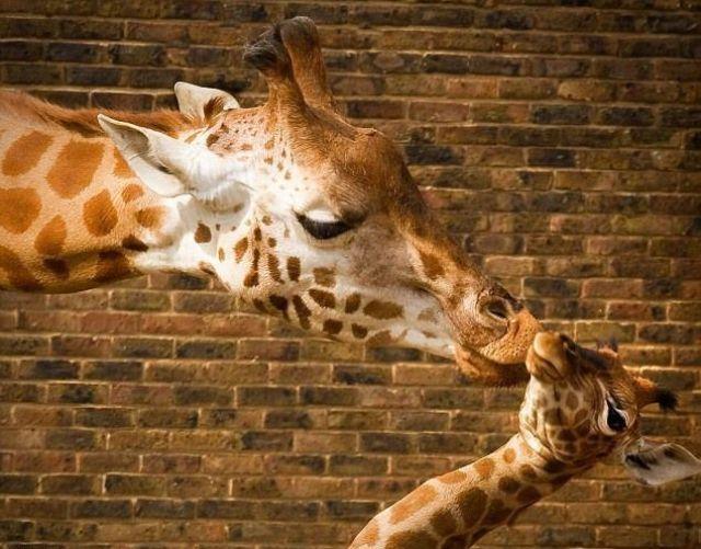 中毒性のあるかわいい動物画像:ハムスター速報