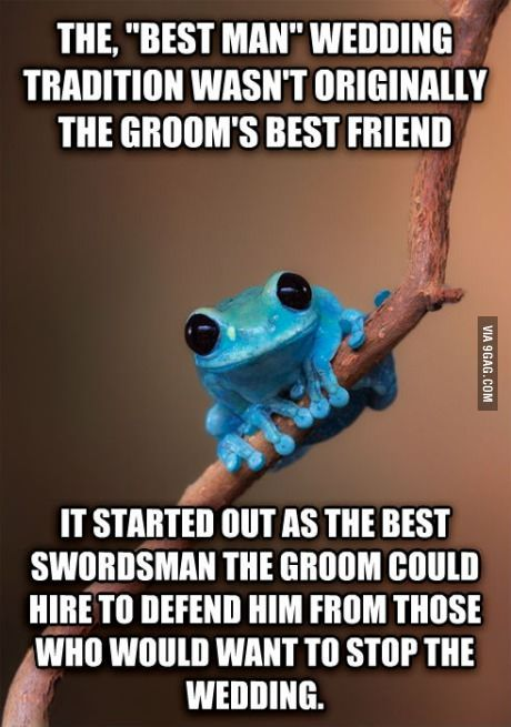 Small Fact Frog.