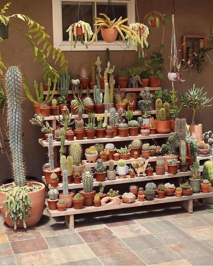Succulents Joli Jardin Cactus Plante Mini Jardins