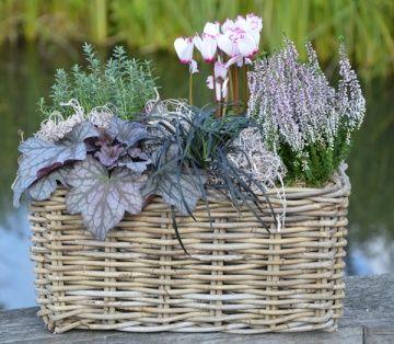jardinières d'automne Bruyères, heuchères, cyclamens, pensées, choux d'ornement...