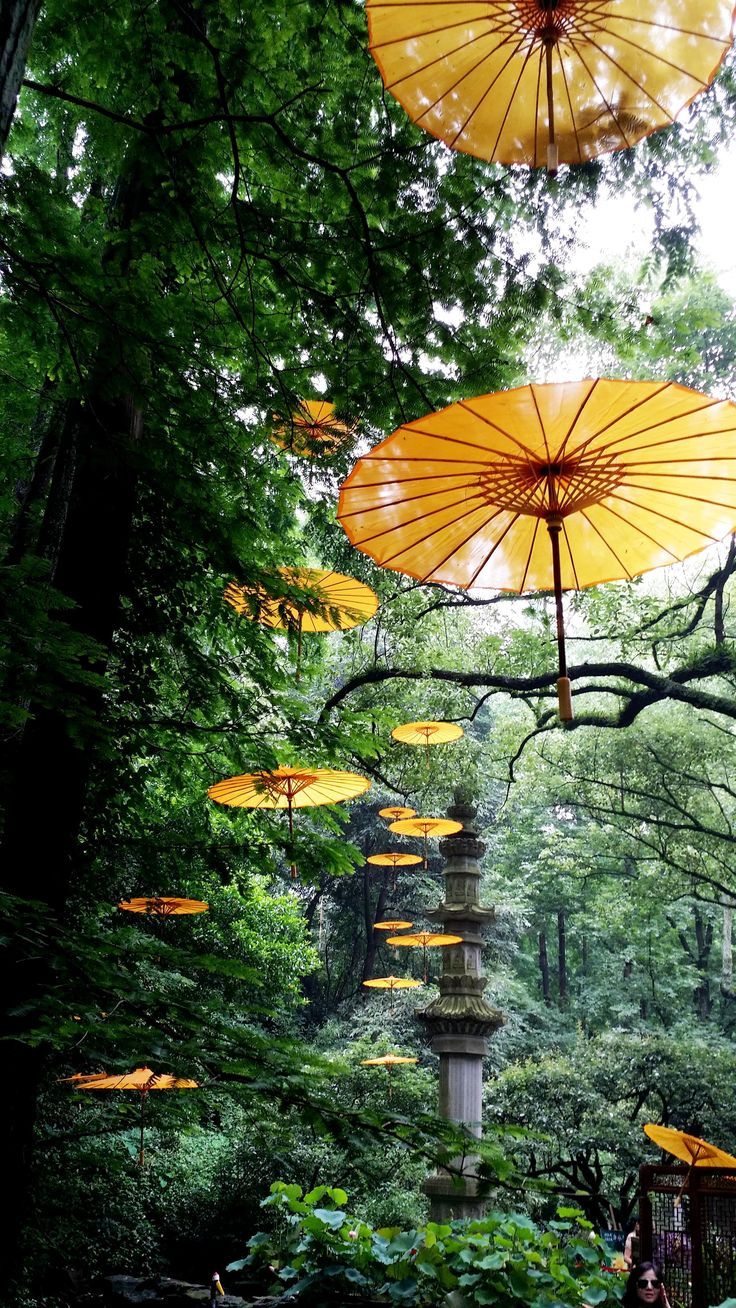 Dreaming of Tiger Spring at Hupao Valley. Imagine the umbrella are taking you to another dream journey?#umbrella #forest