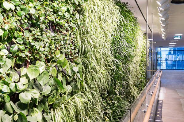 FM MAGAZINE- Lendlease's new global headquarters at Barangaroo South in Sydney is taking shape, with a six-metre high, breathing green wall now installed at the entrance to the office facility.