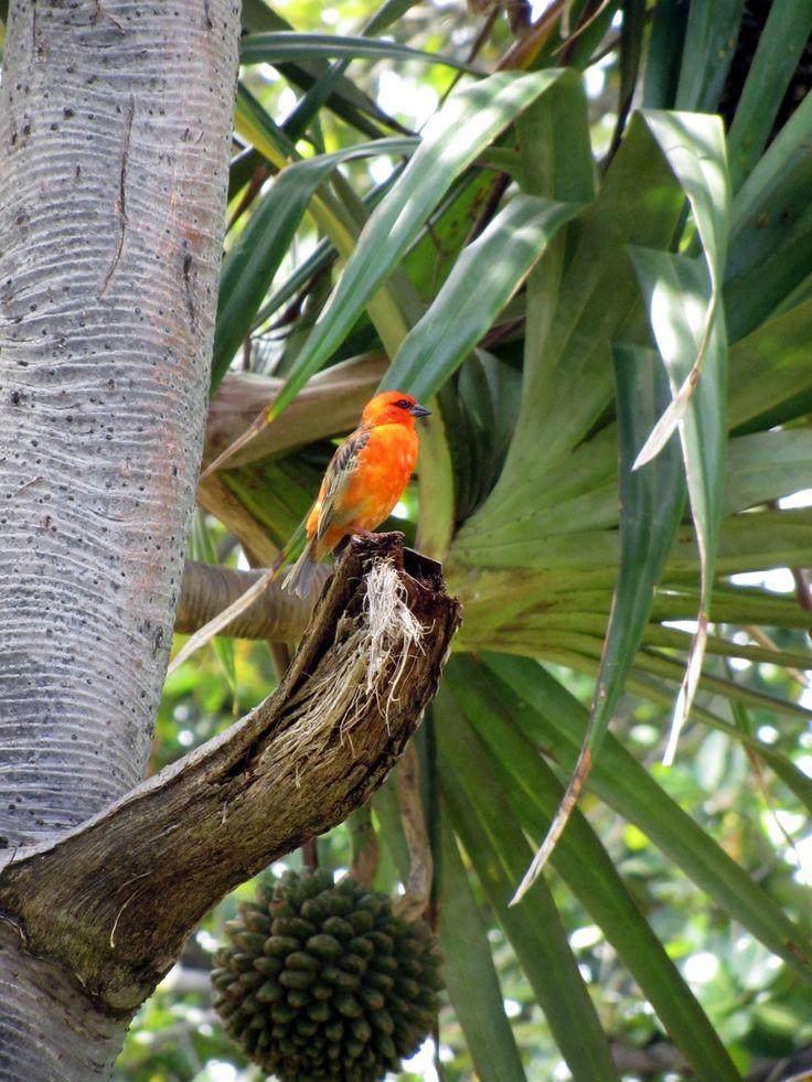 cardinal - Réunion Venez profitez de la Réunion !! www.airbnb.fr/c/jeremyj1489 https://www.hotelscombined.fr/Hotel/Blue_Margouillat_Seaview_Hotel_Saint_Leu.htm?a_aid=150886