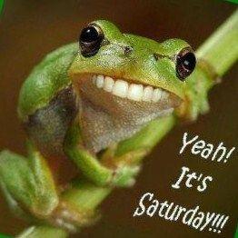 Saturday Frog