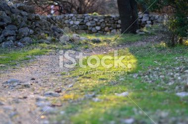 path grass and rocks Royalty Free Stock Photo