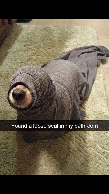 17 Terbaik Ide Tentang Gambar Anjing Lucu Di Pinterest Anjing Lucu