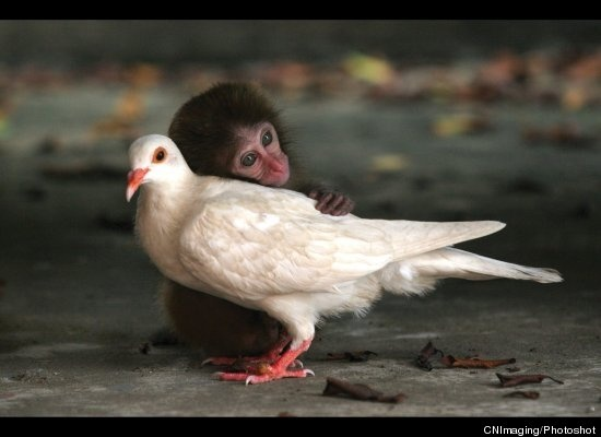 monkey and dove. awwwwwwww.