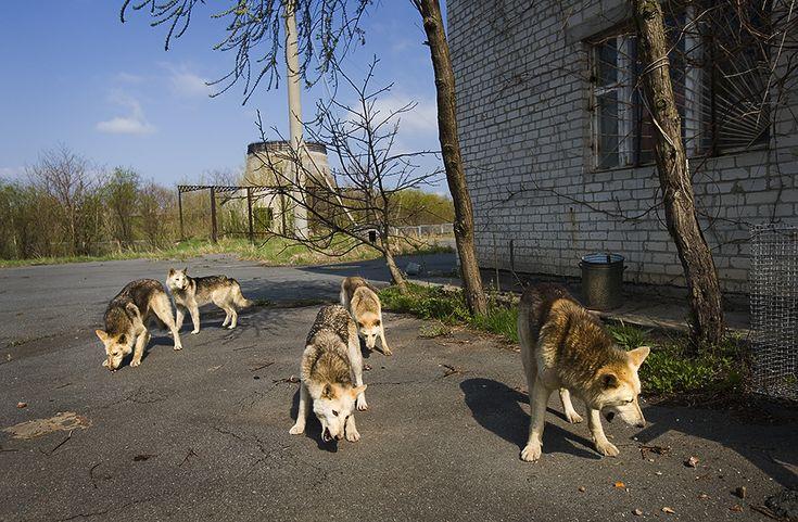 De gevolgen van de kernramp in Tsjernobyl zijn nog steeds gruwelijk | VICE | Netherlands