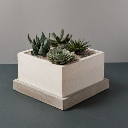Atria Vase - Concrete vase with succulents by LESS is HOME