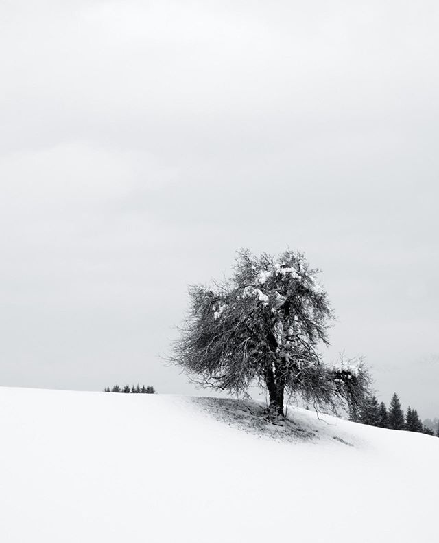 Alone 21 From The Cabin Fever Series The Perfect Landscape For Me Fresh Snow A Tree And A Grey Sky Austria Fineartphoto Grey Skies Landscape Cabin Fever