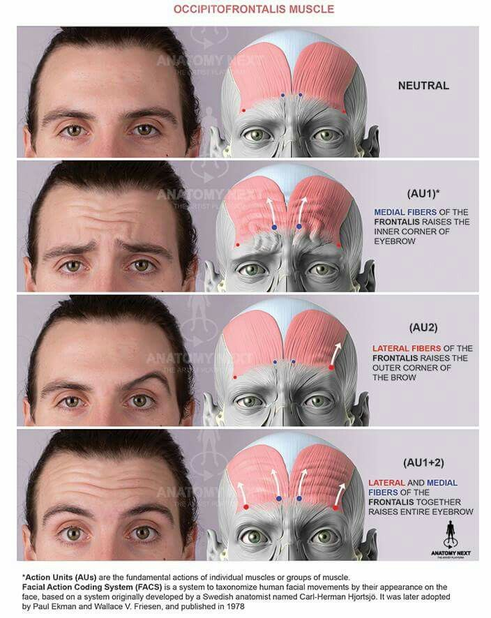 69 best anatomy face and head images on Pinterest | Tutorials, Face ...