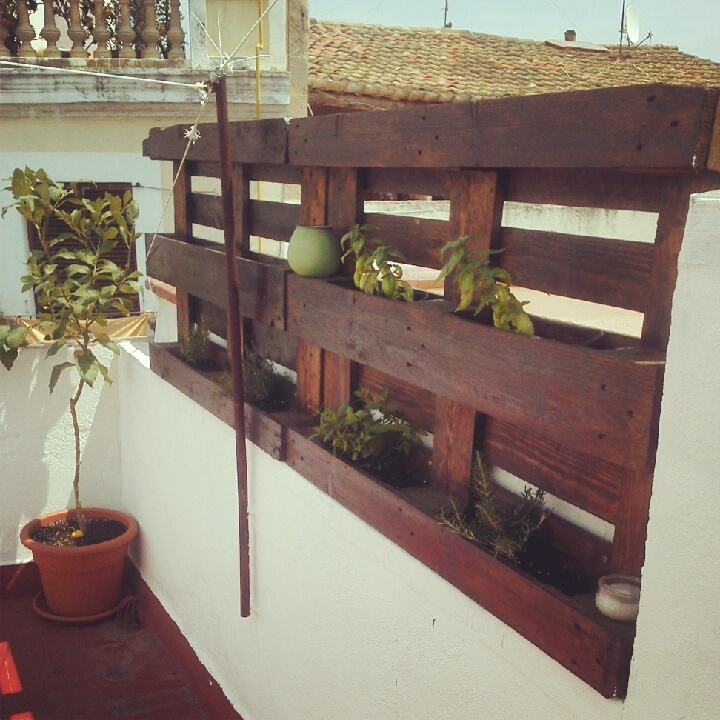 Tanca herbada de palet / Pallet fence with herbs.    rosemary, thyme, mint, cactus garden, terrace, outdor