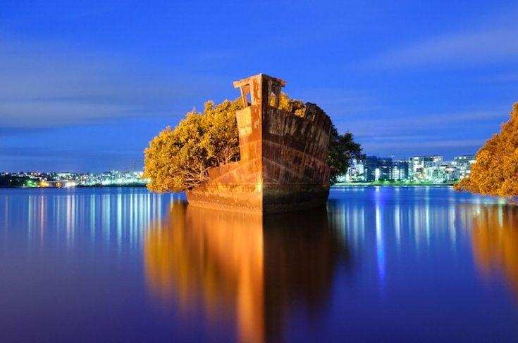 A largo del porto di Sydney una nave dellesercito australiano abbandonata oltre cento anni fa è diventata una foresta galleggiante grazie alla rigogliosa vegetazione spontanea di mangrovie cresciute al suo interno. Conosciuta come la floating forest limbarcazione è posizi