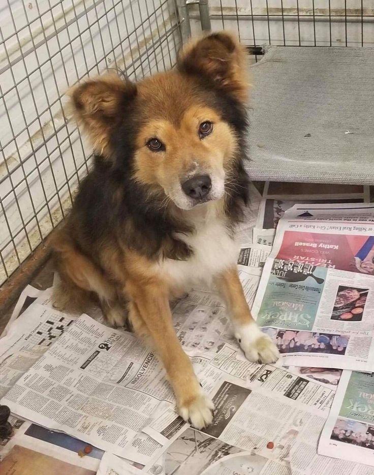 Safe haven puppy rescue petfinder