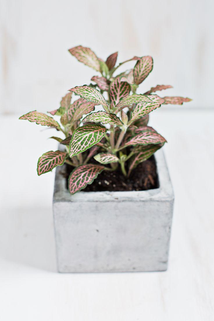 7 Unique Non-Toxic Houseplants