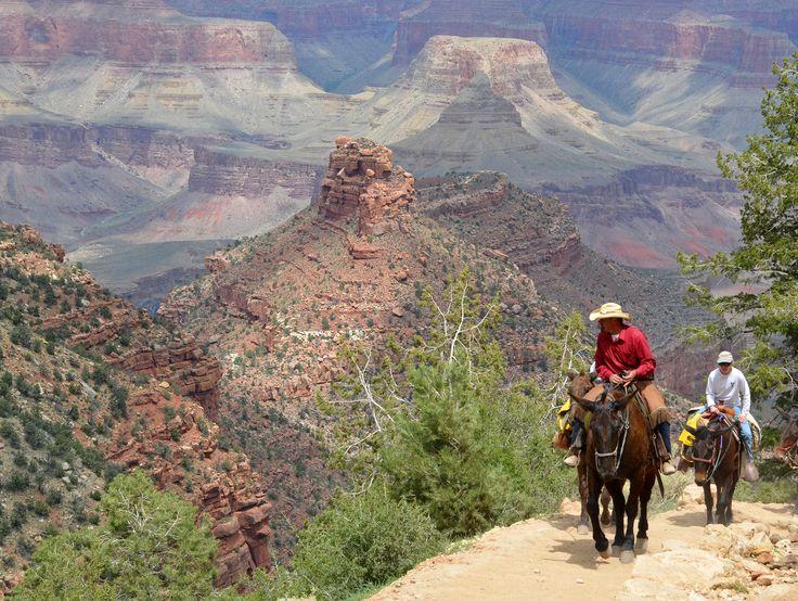 Mules at Grand Canyon