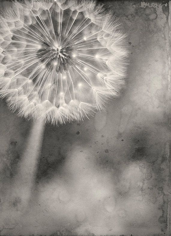 make a wish ... dandelion by brandonsyn on Etsy