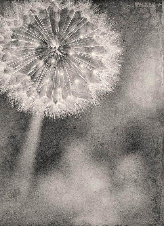 make a wish ... dandelion by brandonsyn on Etsy