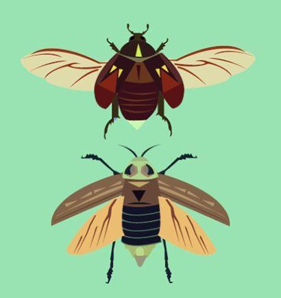 beetles - alysha dawn illustration