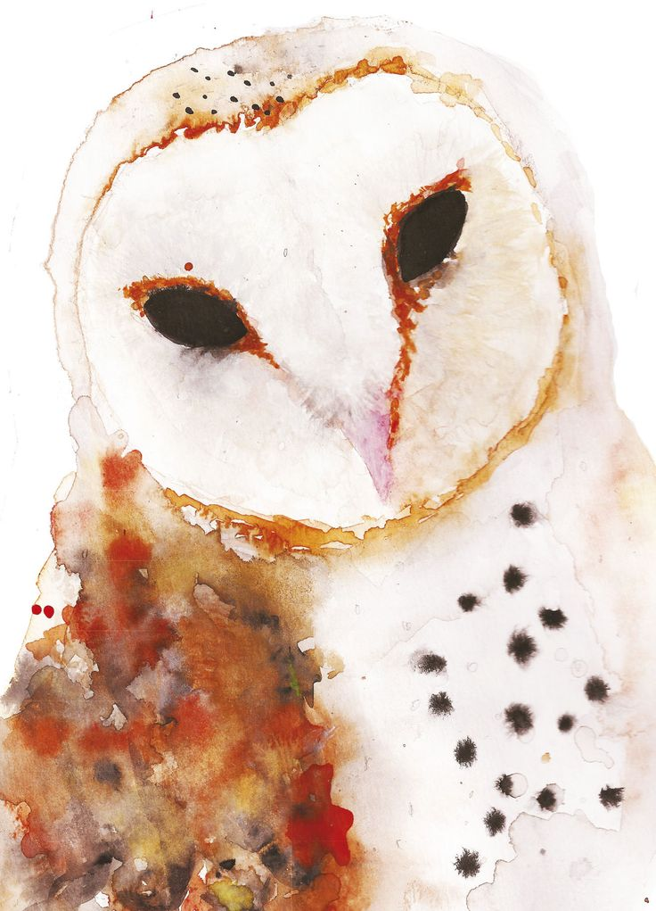 Barn owl. Tornipöllö.