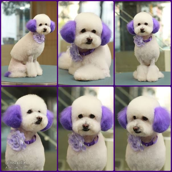 90 Best Dog Grooming Images On Pinterest Dog Grooming Dog