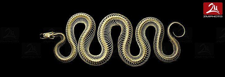 Foto di serpenti in studio su sfondo nero