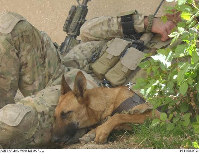 "Military Working Dogs · From Soldier Dogs: I love this photo. After working like a dog, it's time to take a cat nap in the shade for bomb-sniffer Xena and ""Sapper T,"" Australian Special Operations Engineer Regiment (SOER). The photo, freshly posted at militaryphotos.net, was taken by Gary Ramage while embedded with 2nd Battalion, The Royal Australian Regiment (2RAR) in Afghanistan in 2011."