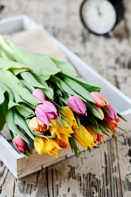 .: Beautiful Flower, Spring Flower, Easter, Colors, Tulip, Flower Arrangements, Fresh Flower, Pretty Flower, Favorite Flower
