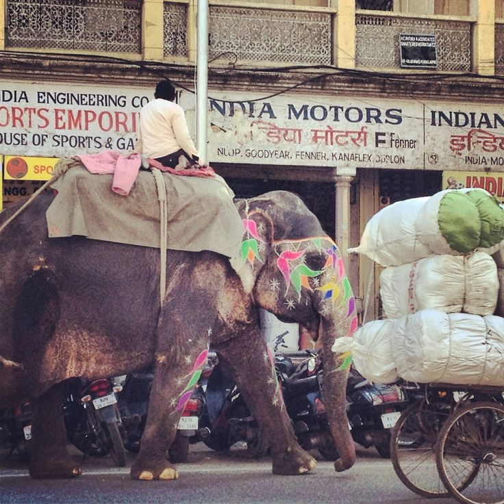 Sibella's recent exploratory expedition to India and Sri Lanka are wonderfully captured in a series of lovely instagram shots here on the Vogue Living (Australia) tumblr, via her instagram account @sibellacourt or on her website http://www.thesocietyinc.com.au.