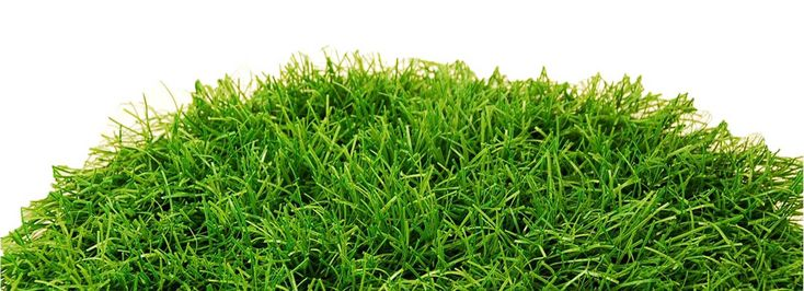 Лучшая цена устройство газонов: рулонный газон, искусственная трава, сеянный.