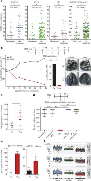Mutant MHC class II epitopes drive therapeutic immune responses to cancer :  Nature :  Nature Publishing Group