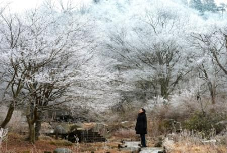 霧氷で白銀色に染まった風景=10日午前、神戸市灘区六甲山町(撮影・風斗雅博) - Yahoo!ニュース(神戸新聞NEXT)