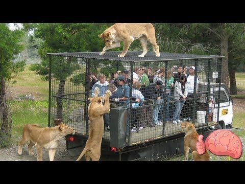 10 Inusuales ZOOLÓGICOS Que Debes Conocer | Mr. Tops - VER VÍDEO -> http://quehubocolombia.com/10-inusuales-zoologicos-que-debes-conocer-mr-tops    En este video te mostraré los zoológicos MÁS INCREÍBLES Y LOCOS del mundo, procuré recopilar los que mejor tratan a los animales y verás que son una excelente propuesta, a diferencia de los tradicionales llenos de jaulas… ¡Confía en mi, será un video entretenido y ante todas las cosas, muy...