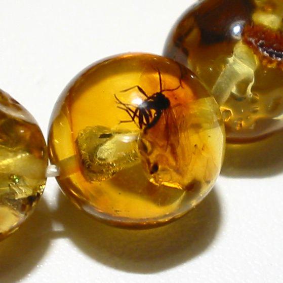 Amber ne doğa tarafından üretildiğini harikasından biri olarak kabul edilir henüz Yüce Allah olacak birçok sırları ile çevrilidir. Milyonlarca yıl (90-130 milyon yıl önce) Bu makalede tarihleri geri kökeni ve geçmişi. Bu bilgiler çok dikkatli araştırma ve çalışmalar kanıtlamıştır. Nereye kehribar asetat numarası fosilleşmiş böcek ve bitkiler bu döneme uzanan bazı türleri bulundu.