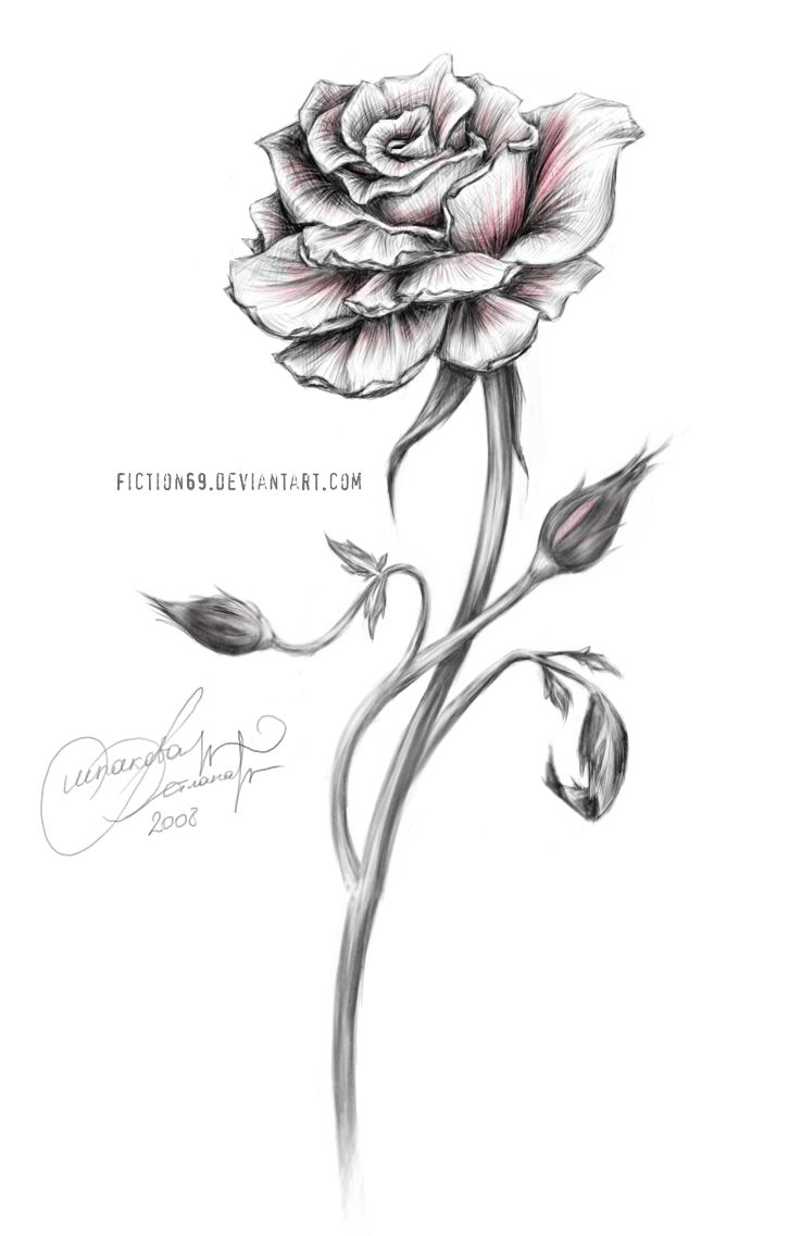 Uncategorized Small Rose Drawing best 25 rose drawing tattoo ideas on pinterest newest design for men