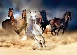 Afbeeldingsresultaat voor witte paarden