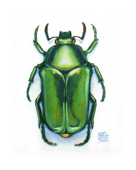 Original Watercolor Painting of Jewel Green Scarab Beetle - by Hunter and Moon for griffin?