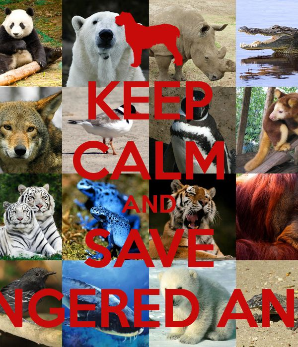 Save Our Animals