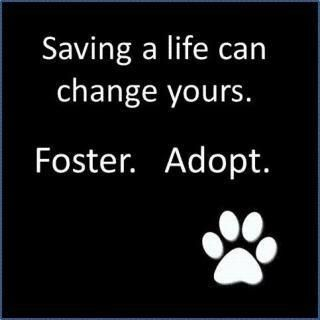 Foster. Adopt.