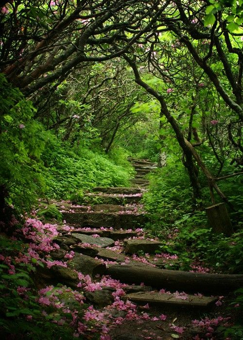 would love to take a walk through these woods Craggy Gardens, Blue Ridge Parkway, North Carolina photo via wendy