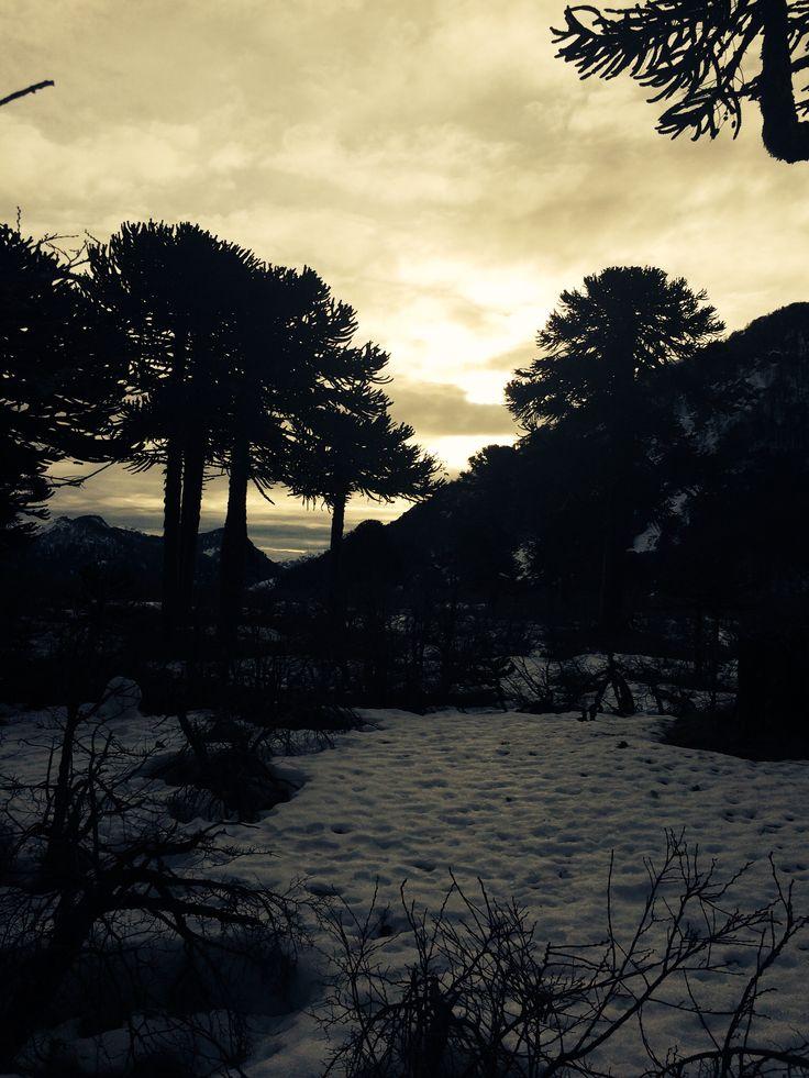 Parque Nacional Villarrica By Beatriz Jofre