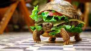 BLT Turtle Style | Humor | Pinterest | Turtles and Style