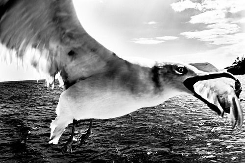 Survive  *Leica M-E *Leica Summicron 35mm f/2 8-element (1st Version) akihirohamada.blogspot.jp/