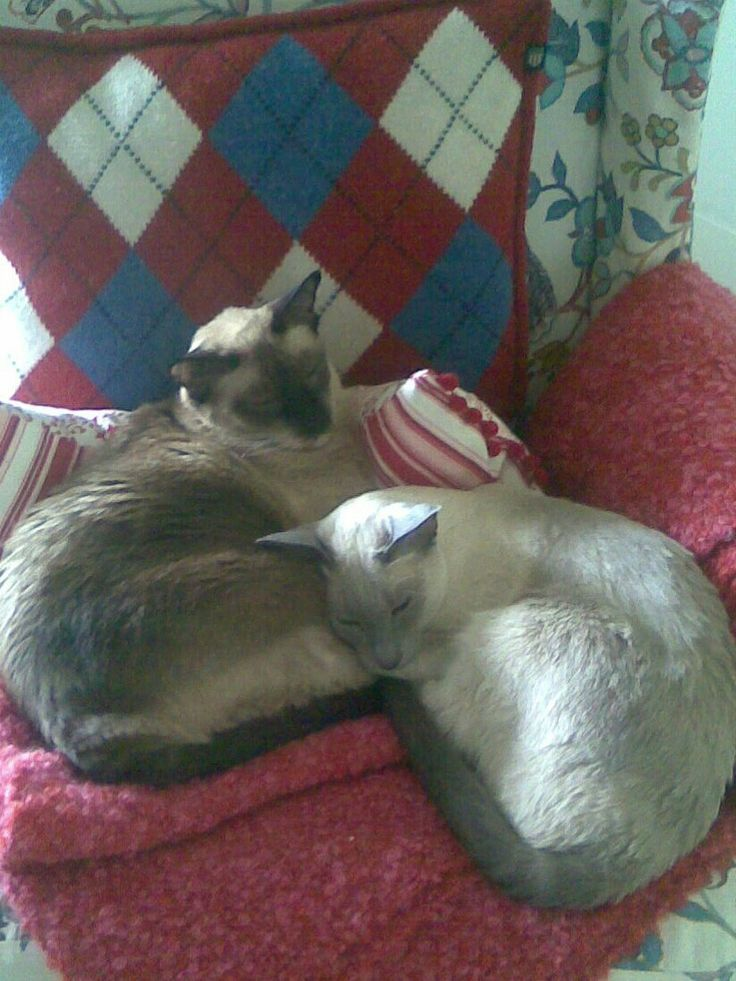 Lisa och Maggy. Sommar 2011.