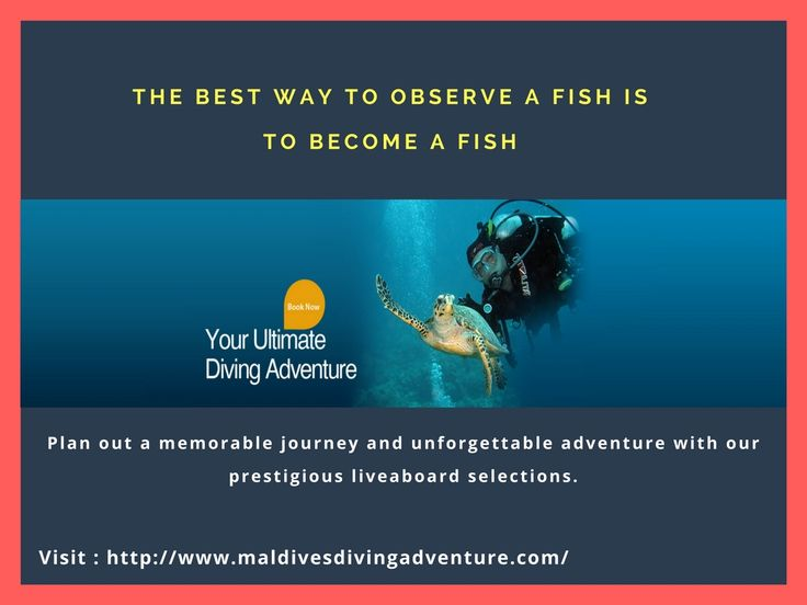 .    Maldives on the west side of the atoll in the southwest season is spectacular. You will regularly encounter large schools of pelagic fish like sharks, eagle rays, and tuna. An adventurous trip with a luxurious and comfortable stay with Maldivesdivingadventure.com.