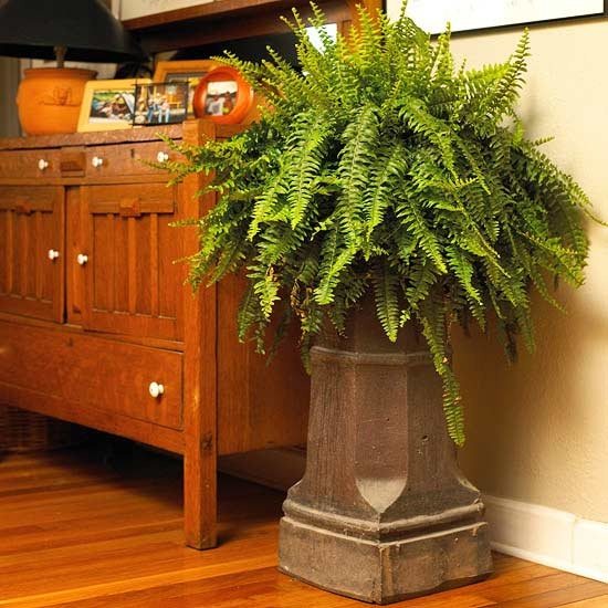 25 best ideas about indoor plant stands on pinterest for Low maintenance indoor flowers