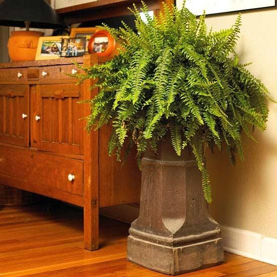 67 best images about indoor plants and arrangement ideas for Indoor house plants low maintenance