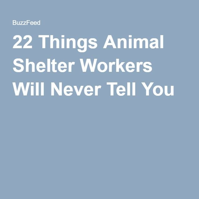 22 Things Animal Shelter Workers Will Never Tell You