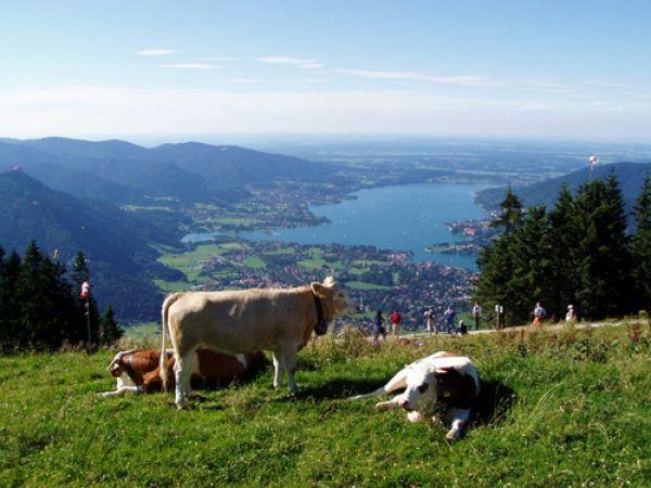 Wandern in der Alpenregion Tegernsee / Schliersee - Top auch im Winter: http://www.outdoor-wandern.de/bayern/wandergastgeber/item/138-detail