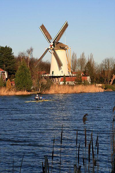 File:Rotterdam-Terbregge molen De Vier Winden vanaf overzijde Rotte m roeiboot.jpg